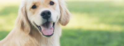 pet health insurance in Lima STATE | Ley Insurance Agency